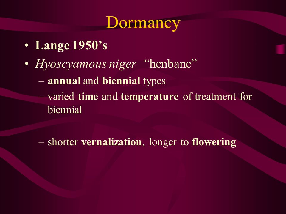 Dormancy Lange 1950's Hyoscyamous niger henbane
