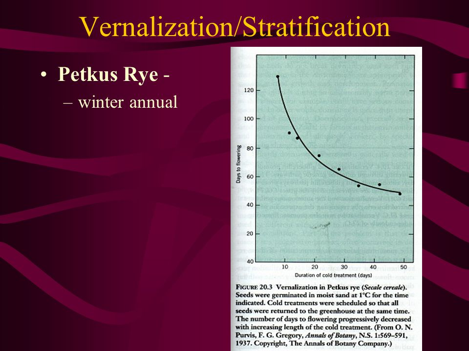 Vernalization/Stratification
