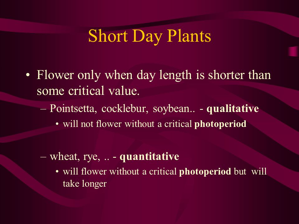 Short Day Plants Flower only when day length is shorter than some critical value. Pointsetta, cocklebur, soybean.. - qualitative.