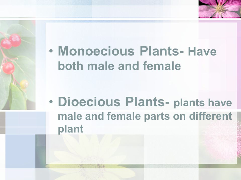 Monoecious Plants- Have both male and female