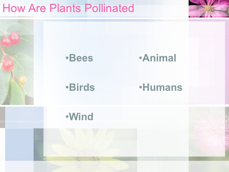 How Are Plants Pollinated