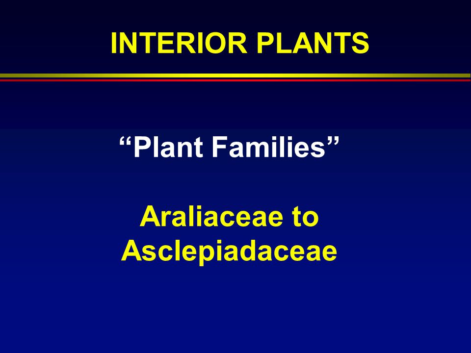 Plant Families Araliaceae to Asclepiadaceae