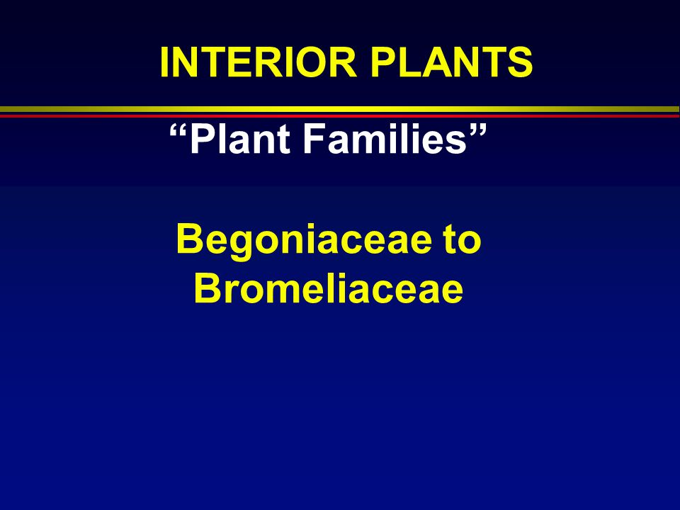 Plant Families Begoniaceae to Bromeliaceae