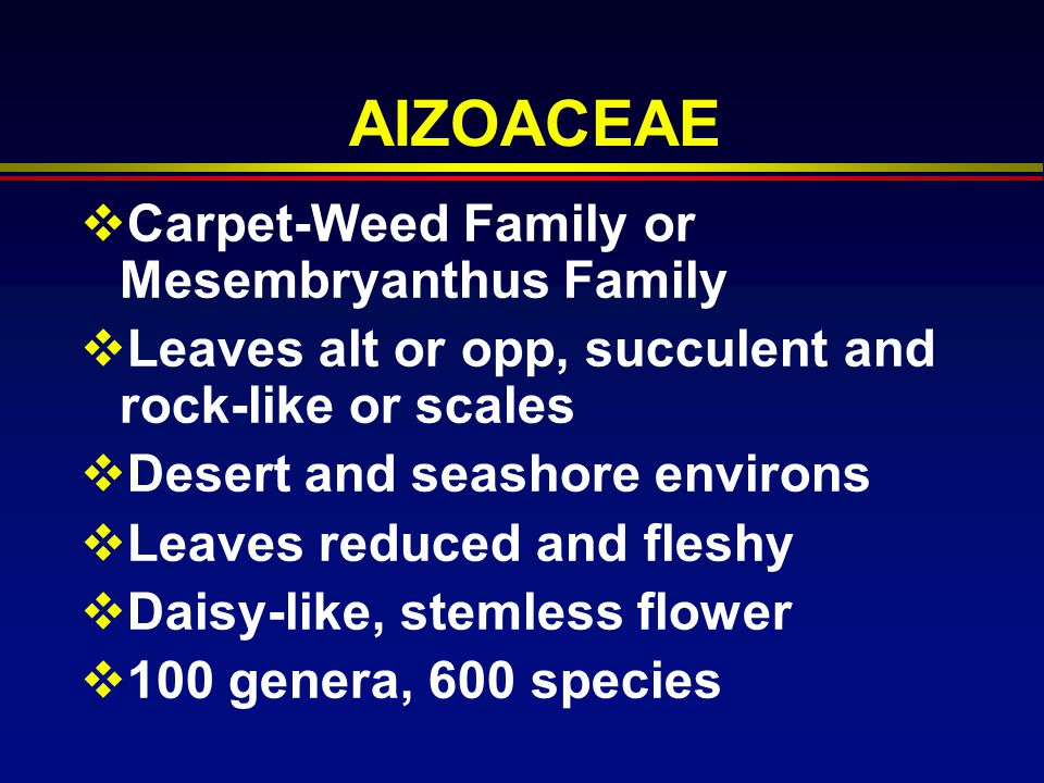 AIZOACEAE Carpet-Weed Family or Mesembryanthus Family
