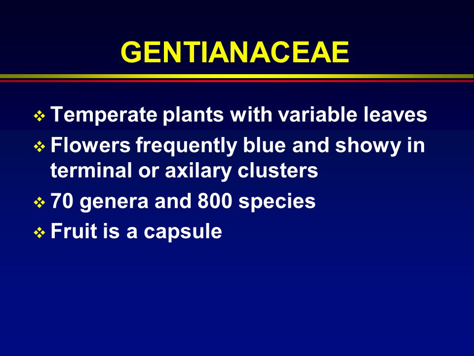 GENTIANACEAE Temperate plants with variable leaves