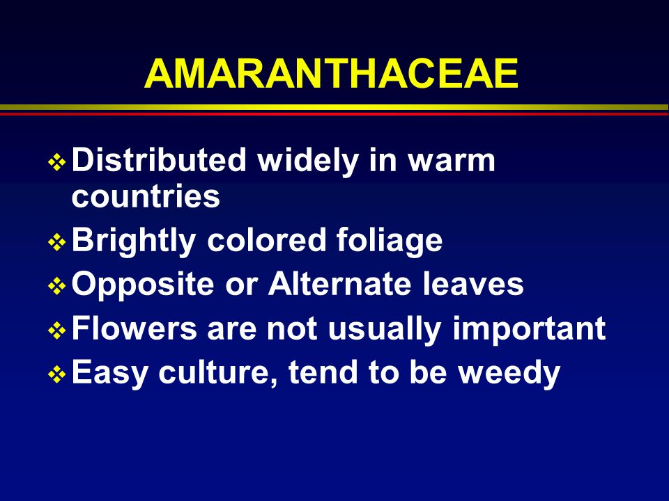 AMARANTHACEAE Distributed widely in warm countries