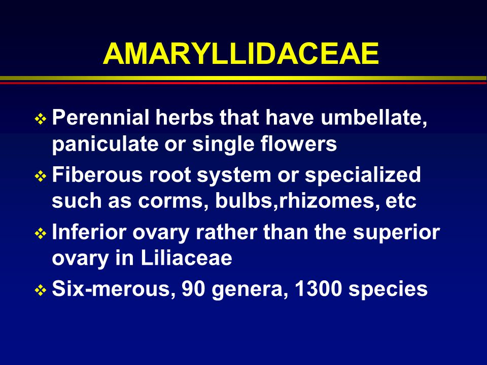 AMARYLLIDACEAE Perennial herbs that have umbellate, paniculate or single flowers.
