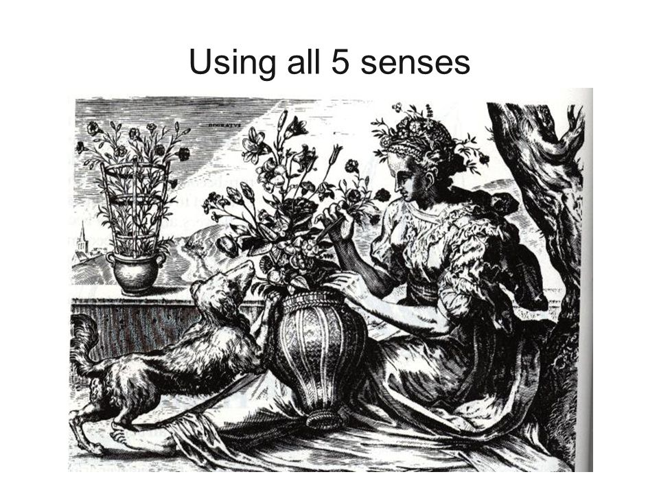 Using all 5 senses All five senses