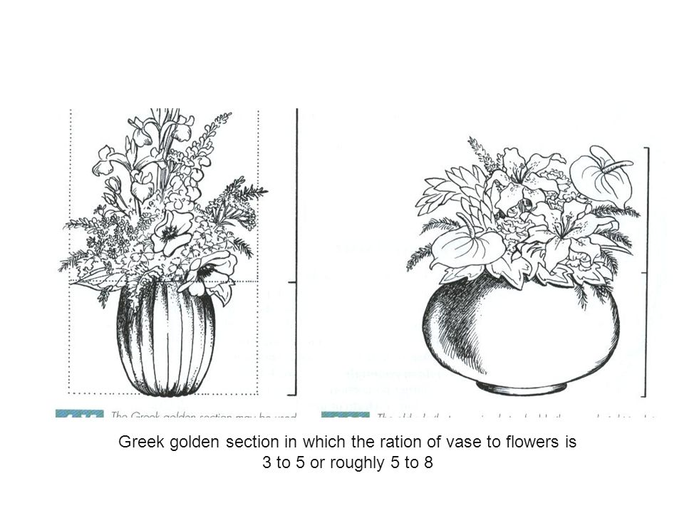 Greek golden section in which the ration of vase to flowers is
