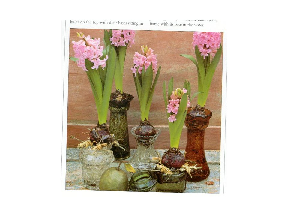Barnes & Noble Books. The New Flower Arranger: Contemporary Approach to Floral Design.
