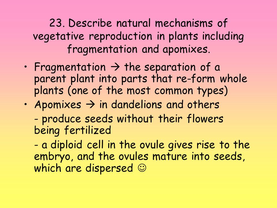 23. Describe natural mechanisms of vegetative reproduction in plants including fragmentation and apomixes.
