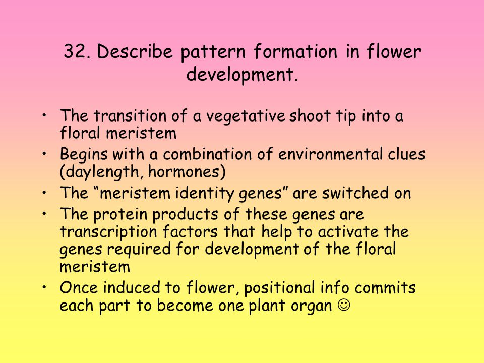 32. Describe pattern formation in flower development.