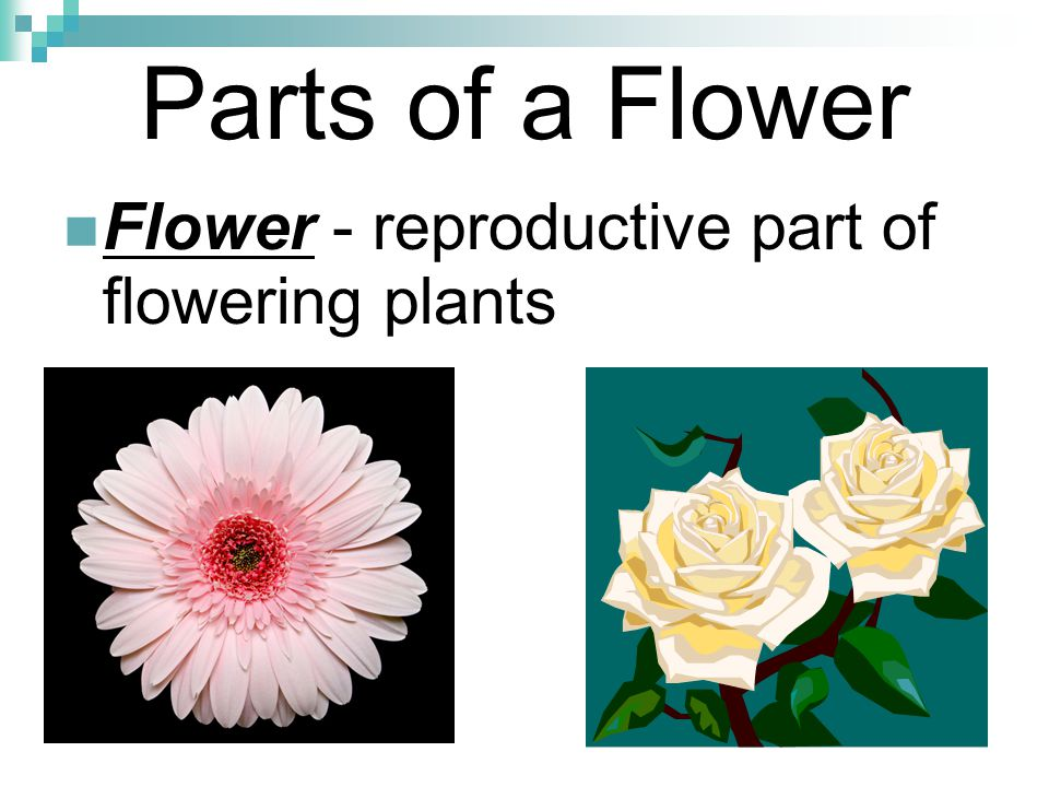 Parts of a Flower Flower - reproductive part of flowering plants