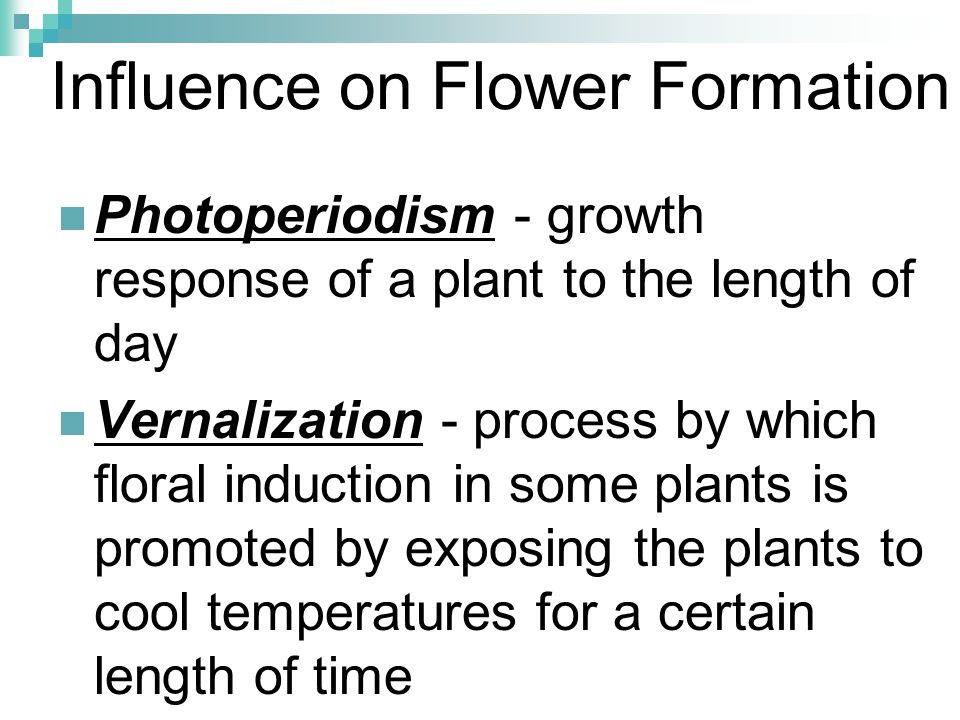 Influence on Flower Formation