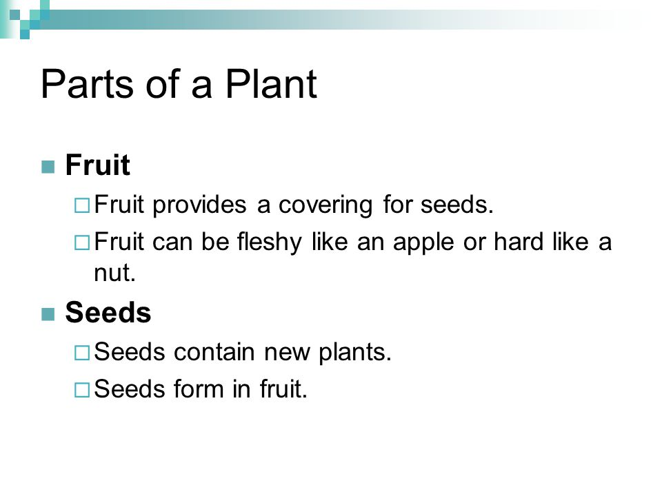 Parts of a Plant Fruit Seeds Fruit provides a covering for seeds.