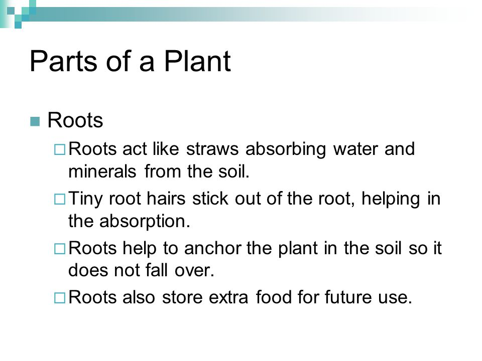 Parts of a Plant Roots. Roots act like straws absorbing water and minerals from the soil.