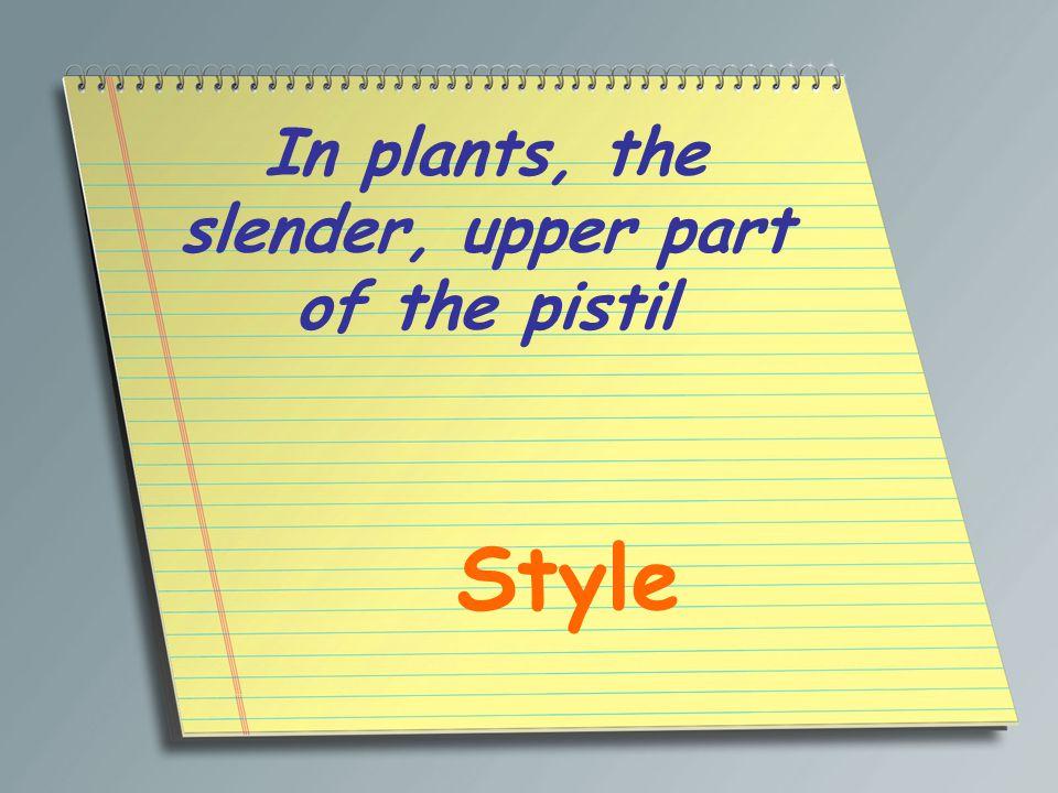 In plants, the slender, upper part of the pistil