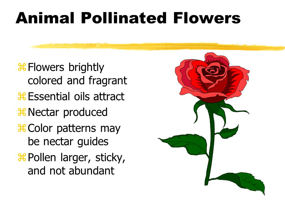 Animal Pollinated Flowers