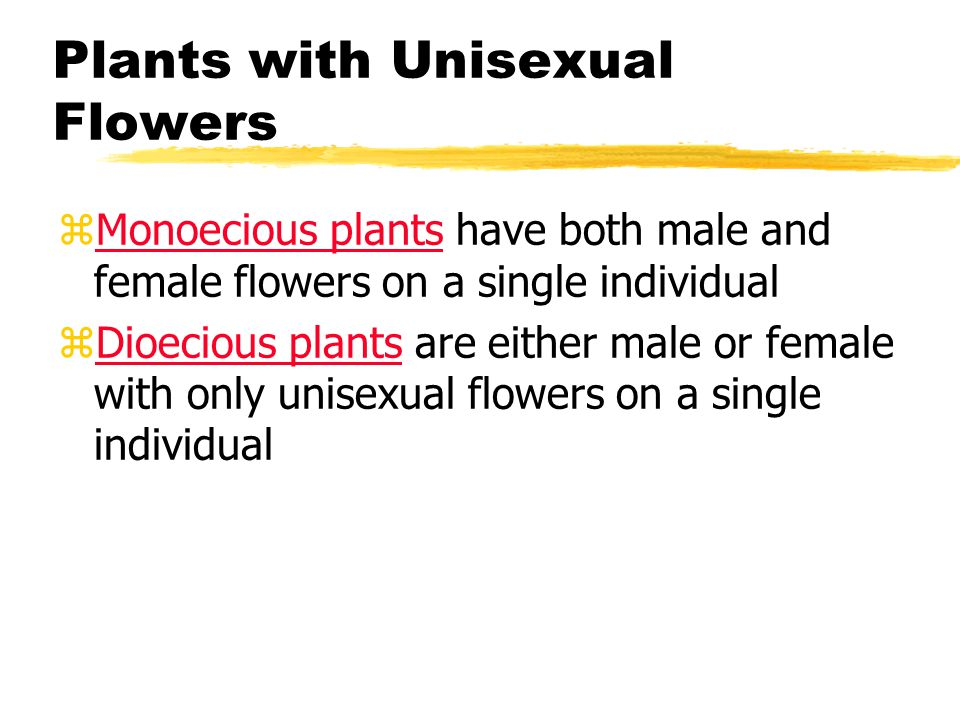 Plants with Unisexual Flowers