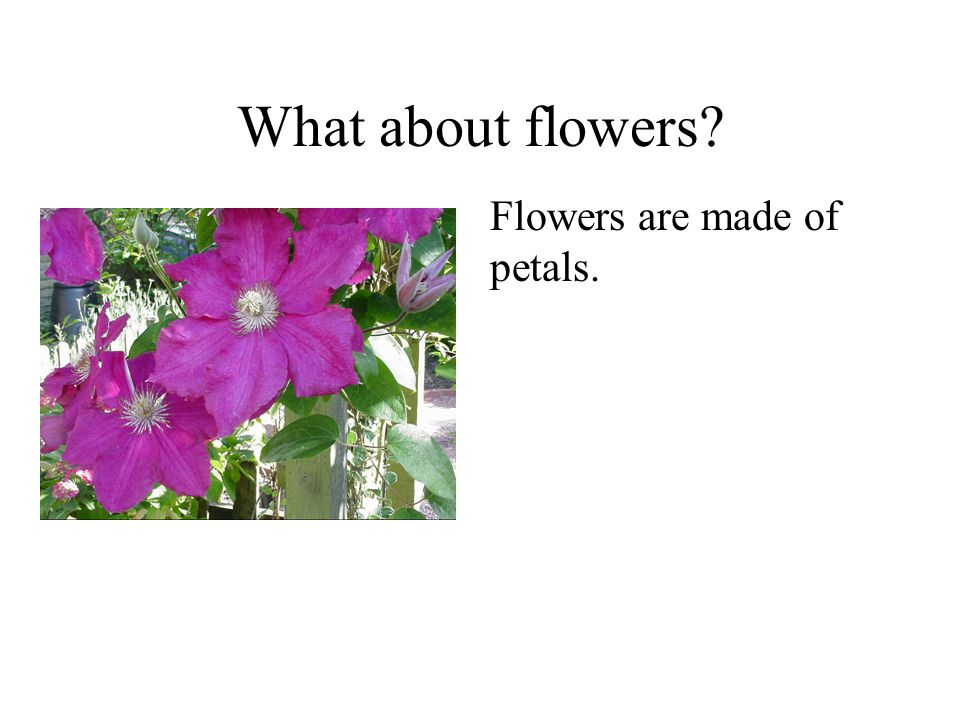 What about flowers Flowers are made of petals. Plants