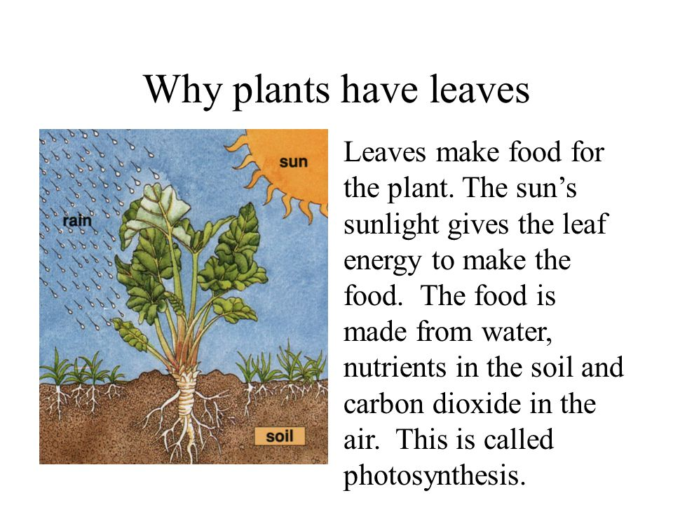 Do Plants Need Carbon Dioxide To Make Food
