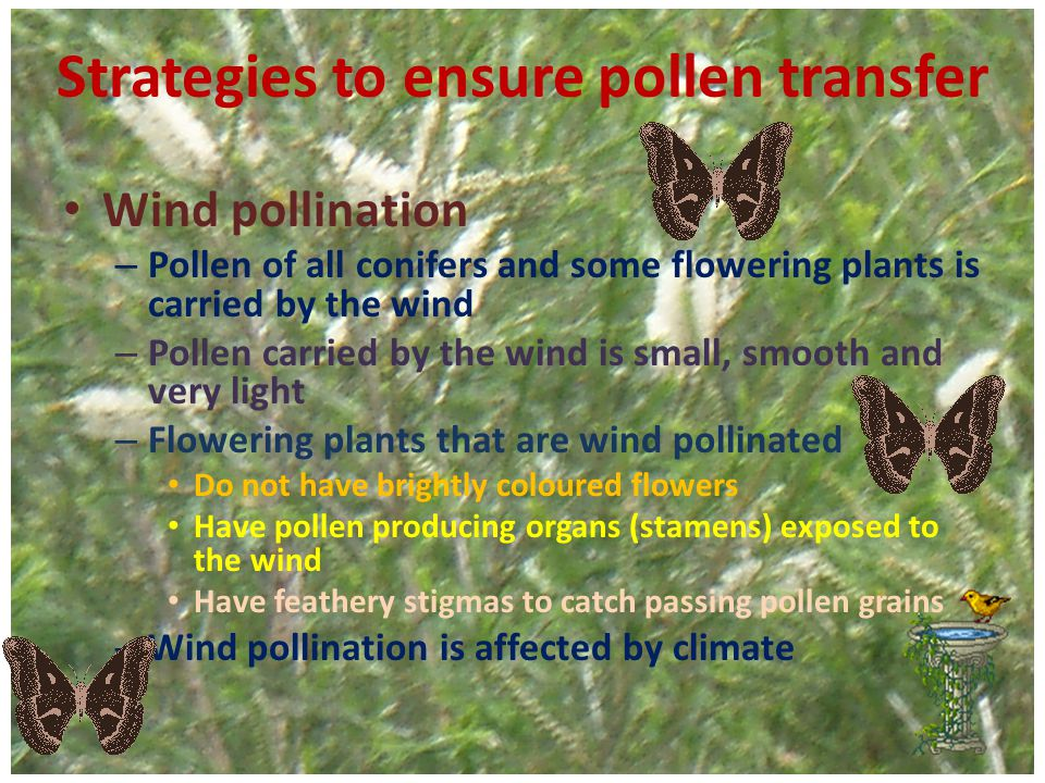 Strategies to ensure pollen transfer