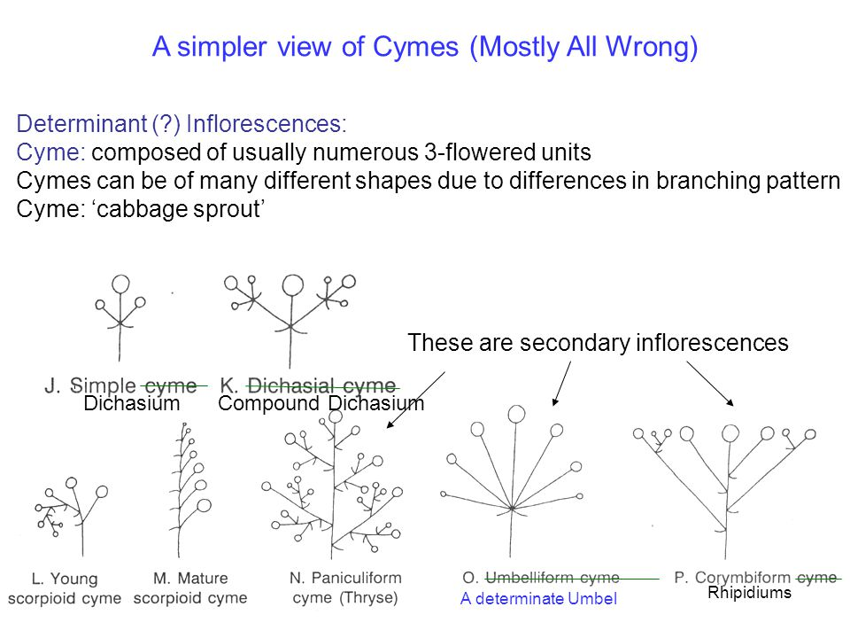 A simpler view of Cymes (Mostly All Wrong)