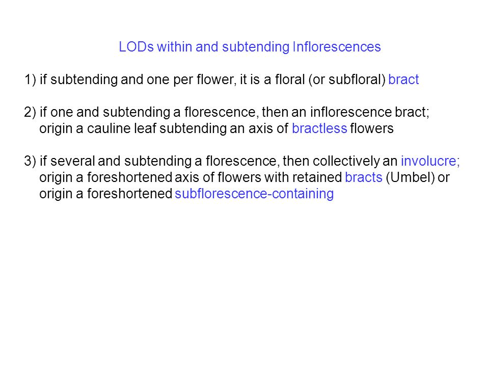 LODs within and subtending Inflorescences