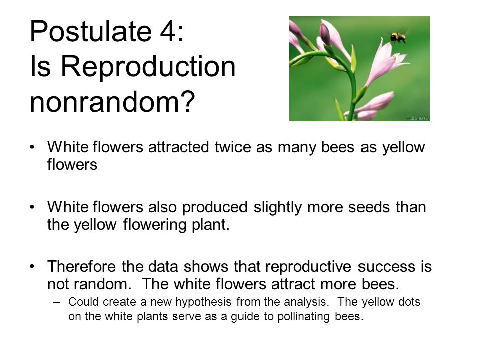 Postulate 4: Is Reproduction nonrandom