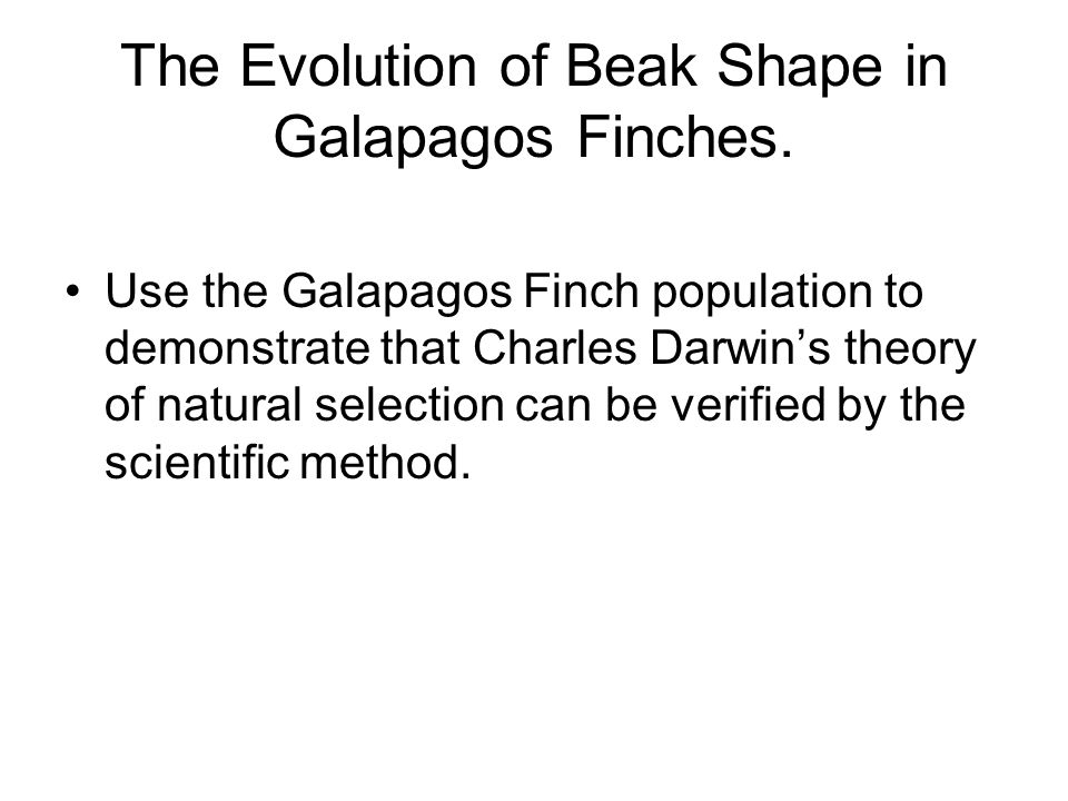 The Evolution of Beak Shape in Galapagos Finches.