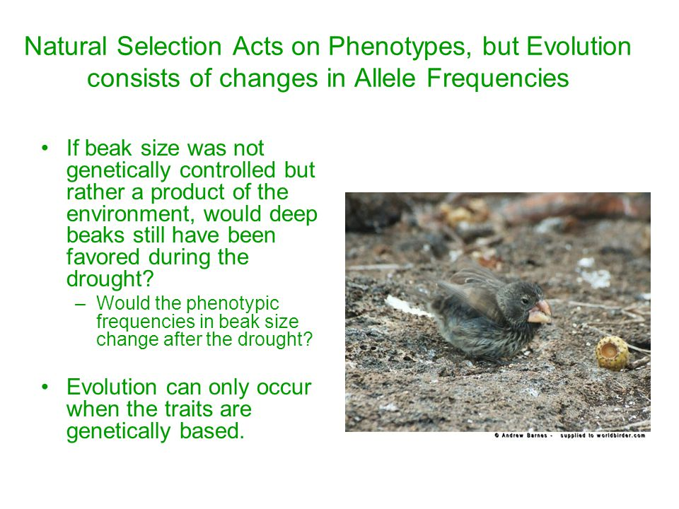 Natural Selection Acts on Phenotypes, but Evolution consists of changes in Allele Frequencies