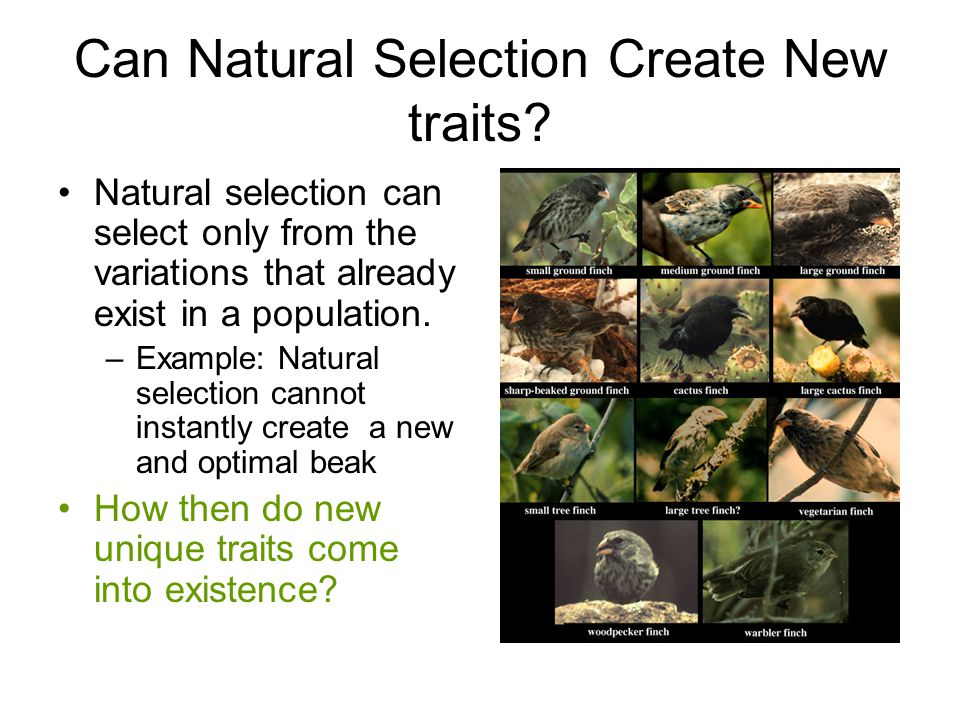 Can Natural Selection Create New traits