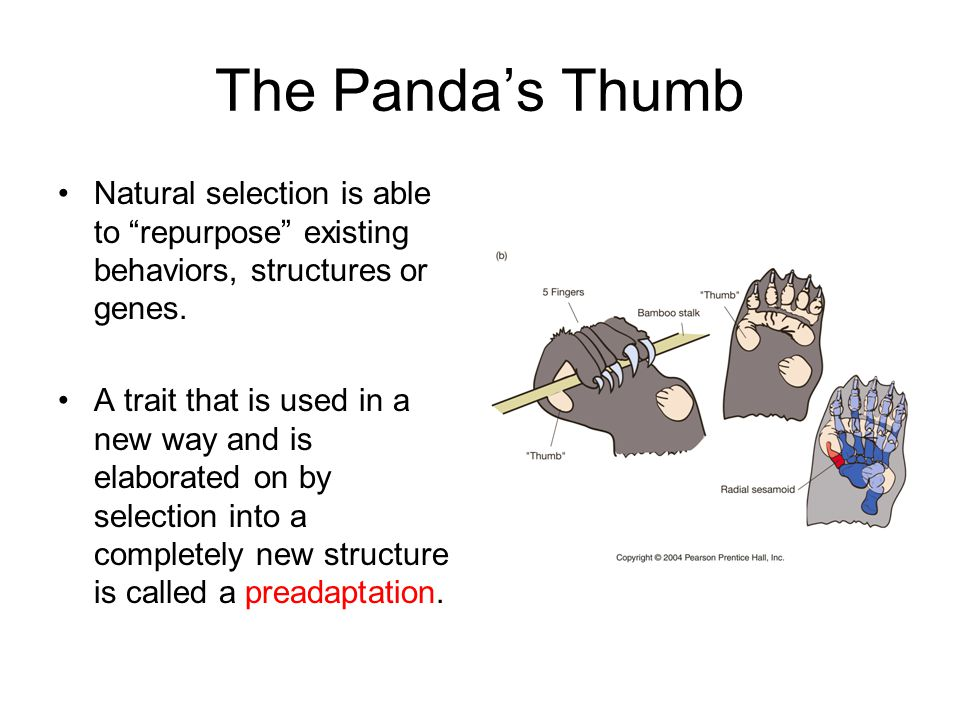The Panda's Thumb Natural selection is able to repurpose existing behaviors, structures or genes.