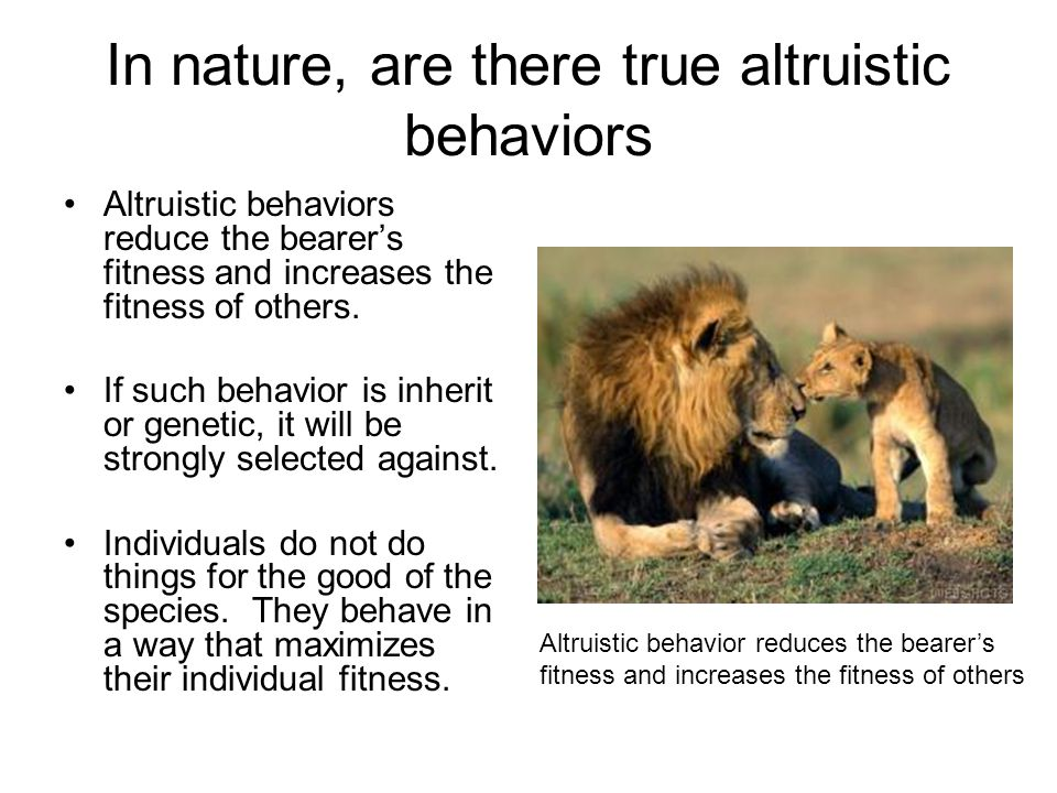 altruistic behavior This biological notion of altruism is not though an altruistic behaviour which unto others: the evolution and psychology of unselfish behavior.