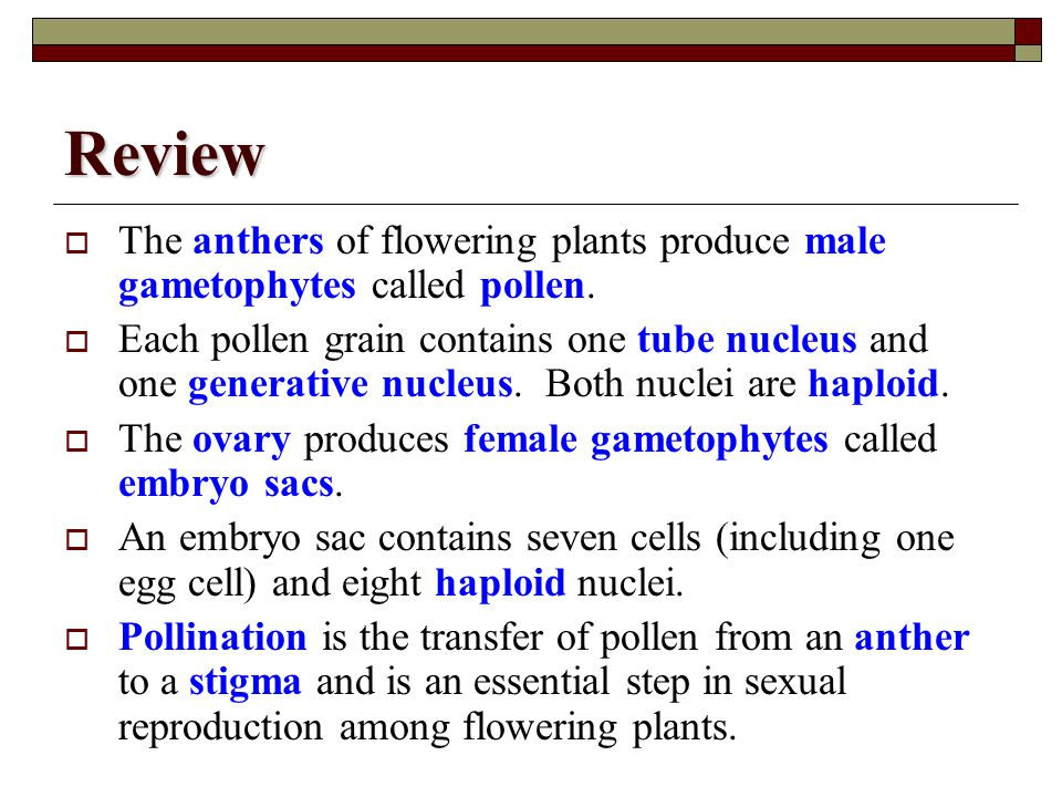 Review The anthers of flowering plants produce male gametophytes called pollen.