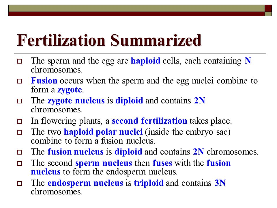 Fertilization Summarized