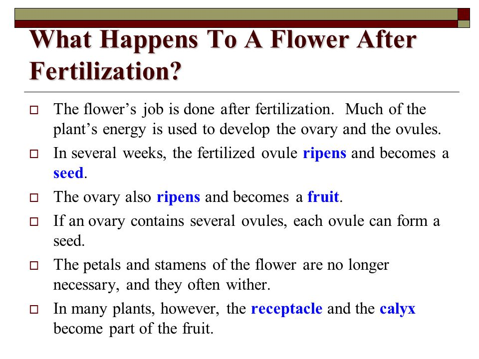 What Happens To A Flower After Fertilization