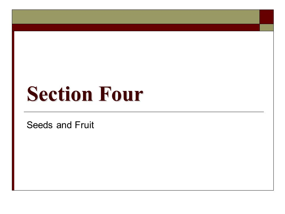 Section Four Seeds and Fruit