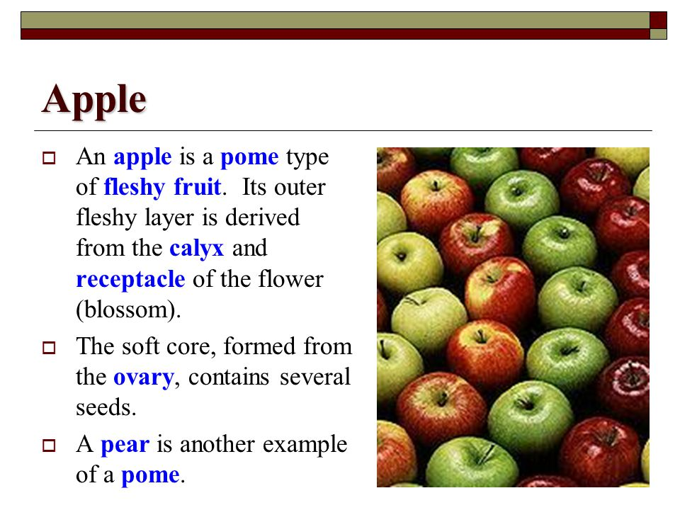 Apple An apple is a pome type of fleshy fruit. Its outer fleshy layer is derived from the calyx and receptacle of the flower (blossom).