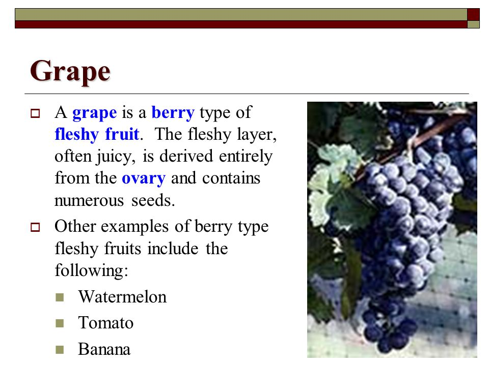 Grape A grape is a berry type of fleshy fruit. The fleshy layer, often juicy, is derived entirely from the ovary and contains numerous seeds.