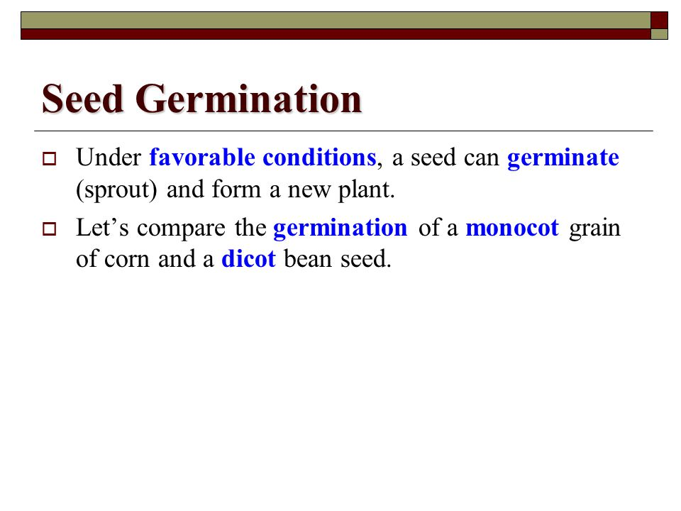 Seed Germination Under favorable conditions, a seed can germinate (sprout) and form a new plant.
