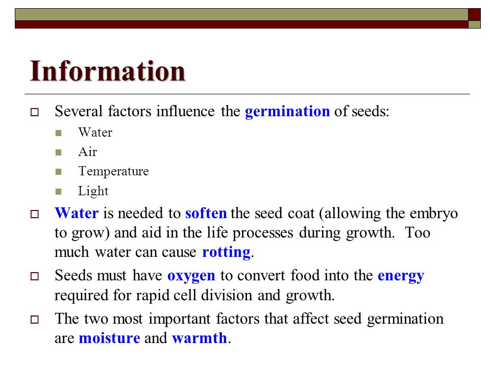 Information Several factors influence the germination of seeds: