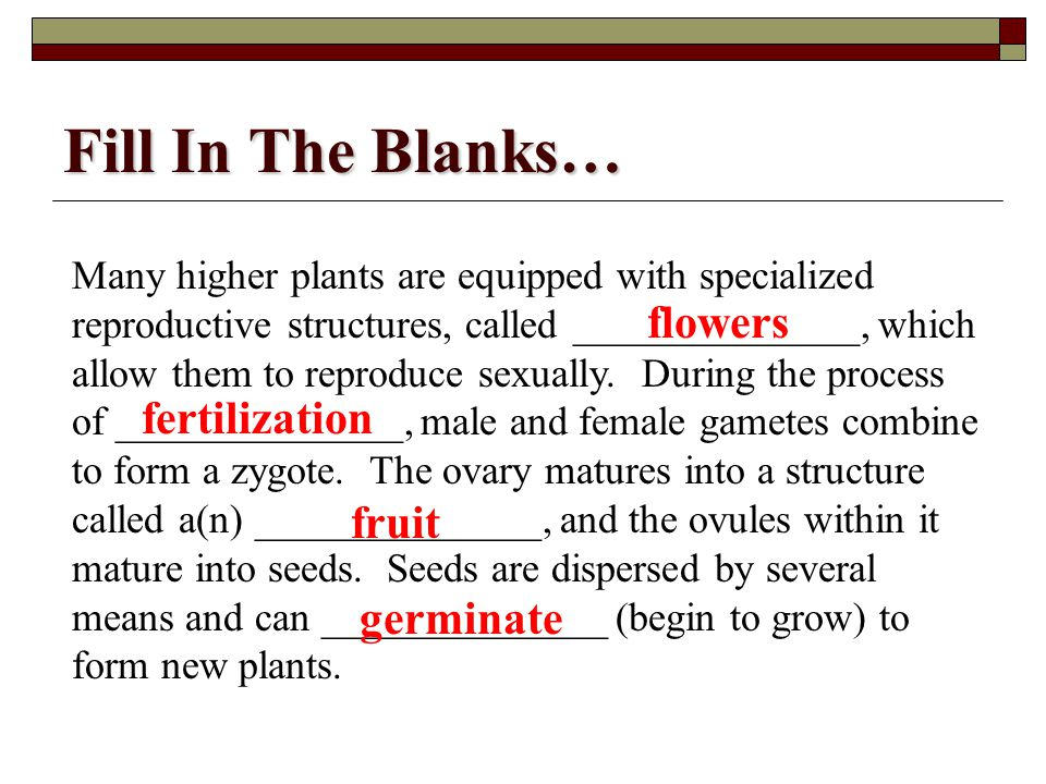 Fill In The Blanks… flowers fertilization fruit germinate