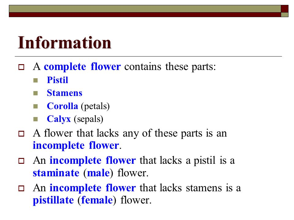 Information A complete flower contains these parts: