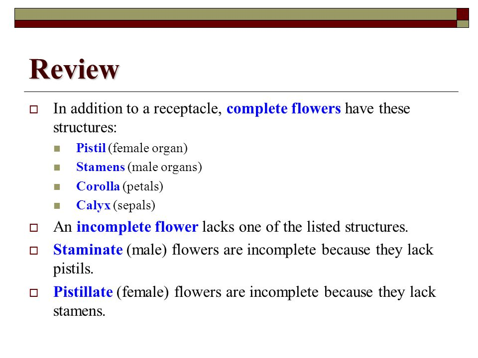 Review In addition to a receptacle, complete flowers have these structures: Pistil (female organ) Stamens (male organs)