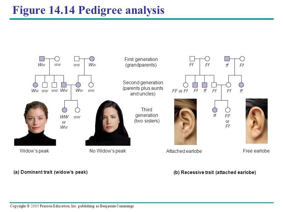 Figure 14.14 Pedigree analysis