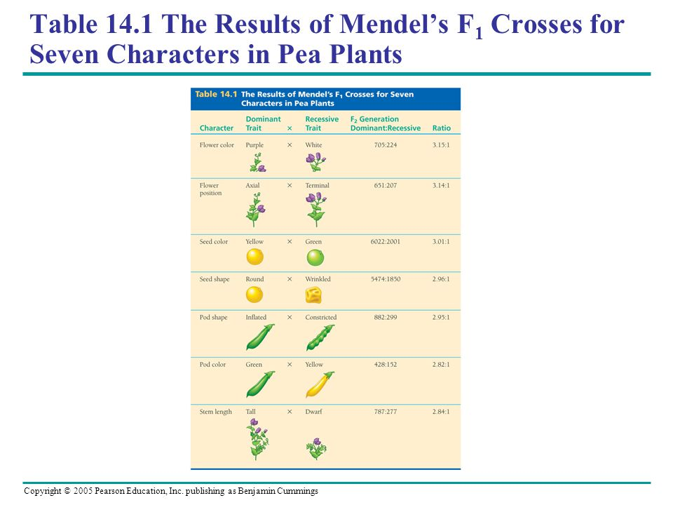 Table 14.1 The Results of Mendel's F1 Crosses for Seven Characters in Pea Plants