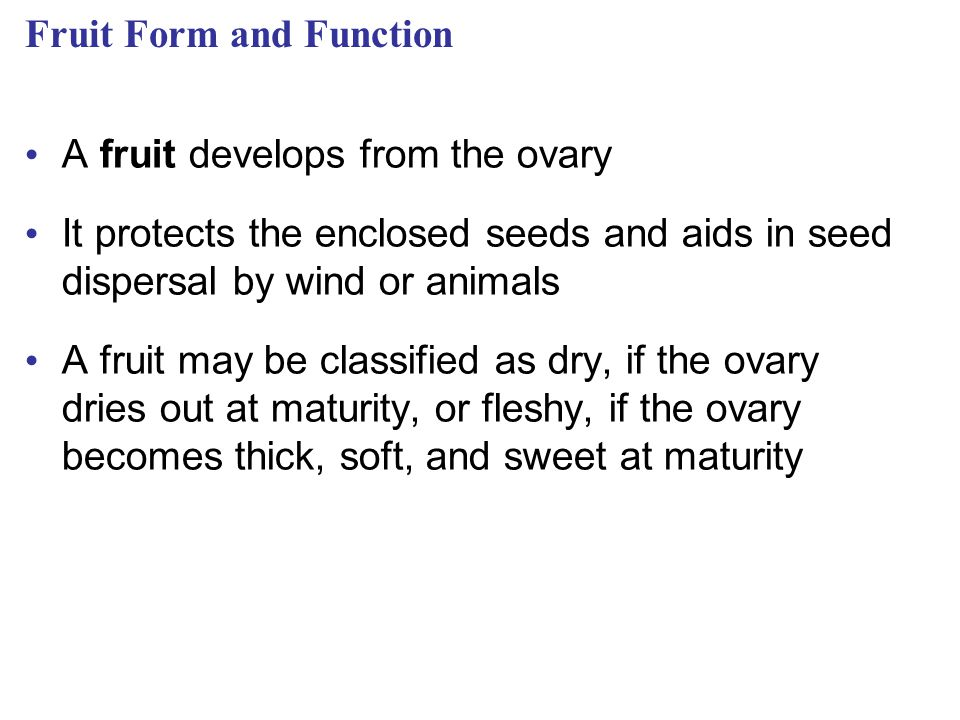 Fruit Form and Function