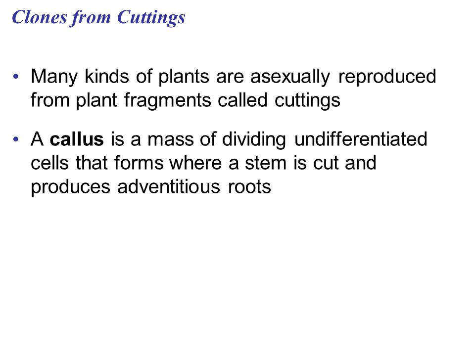 Clones from Cuttings Many kinds of plants are asexually reproduced from plant fragments called cuttings.