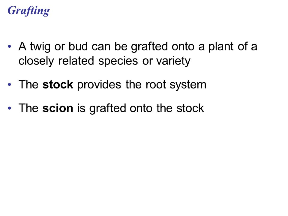 Grafting A twig or bud can be grafted onto a plant of a closely related species or variety. The stock provides the root system.